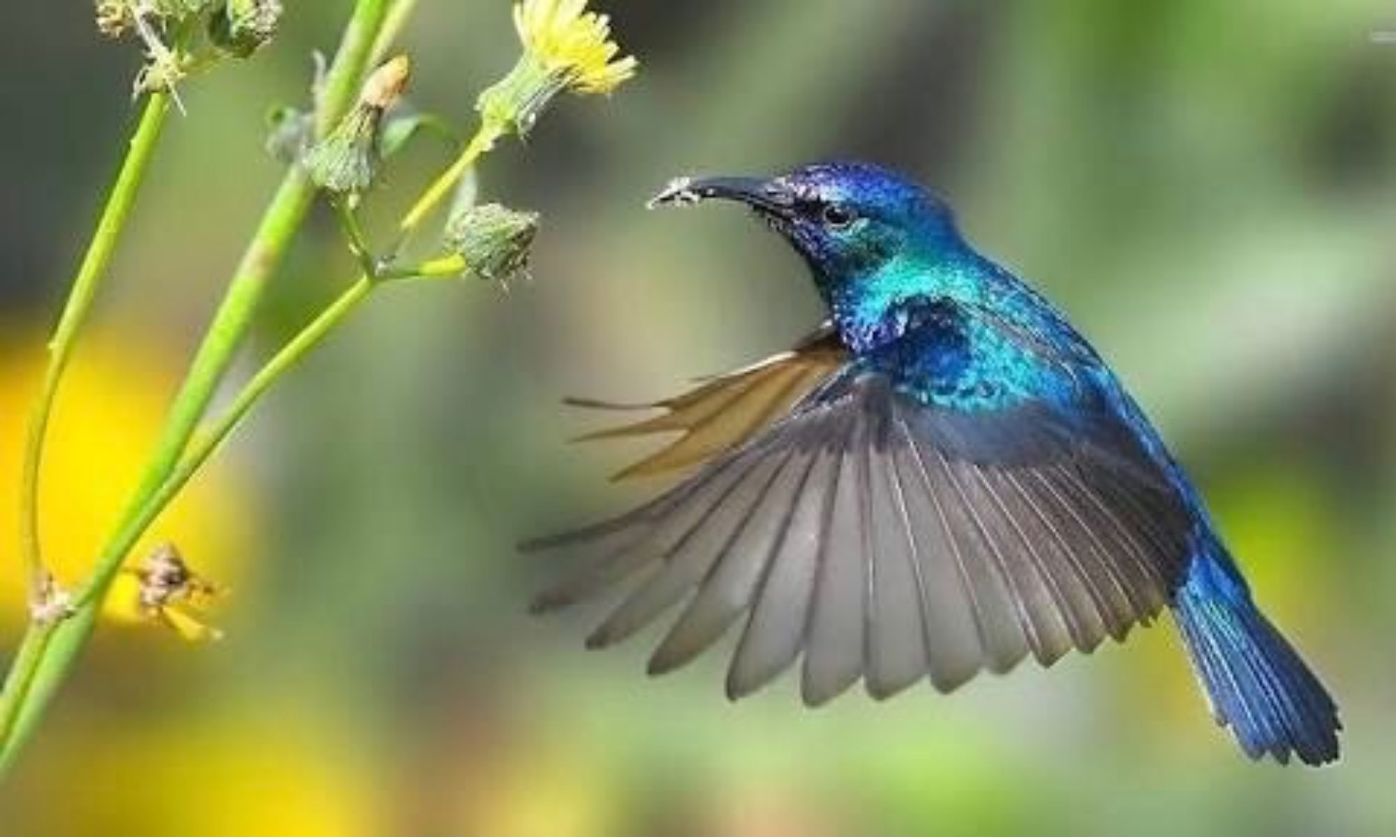 HummingBird  - Coating for the environment -